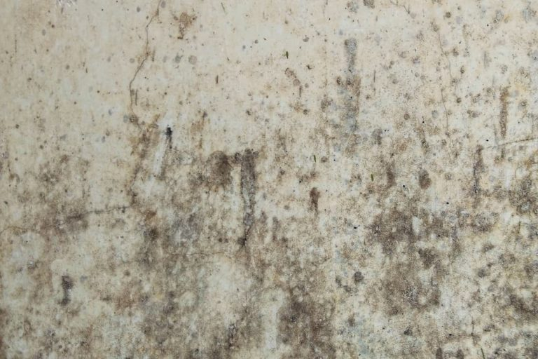 Do Humidifiers Cause Mold?
